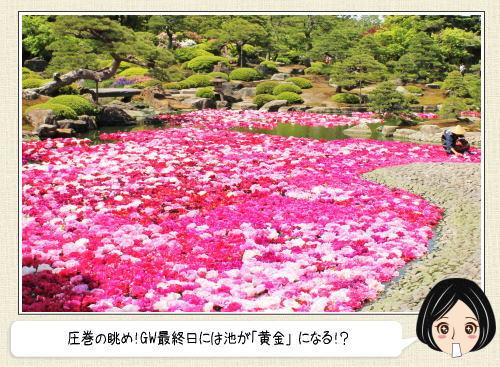 絶景!10万輪の牡丹まつり島根で開催、GW1日限定「黄金の池」も