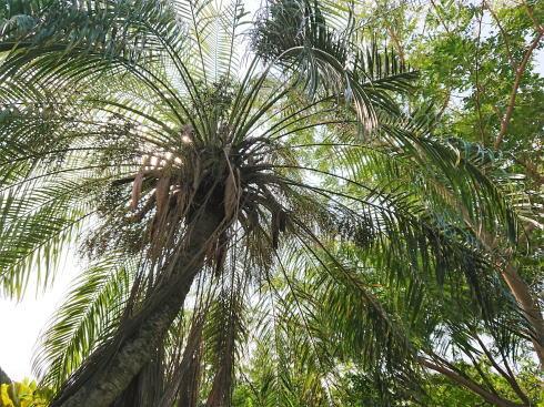 沖縄 プラウマンズランチべーカリー 庭の木々