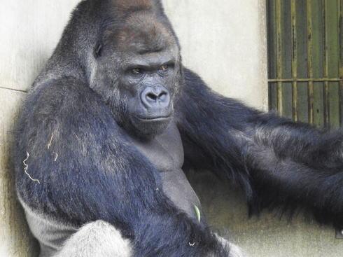 東山動物園、イケメンすぎるゴリラほか展示数日本一・広すぎ園内の見どころ