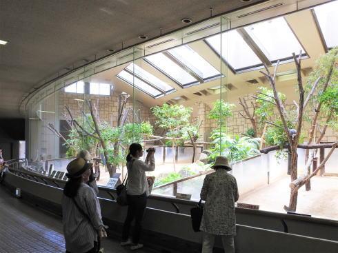 東山動物園 コアラ舎