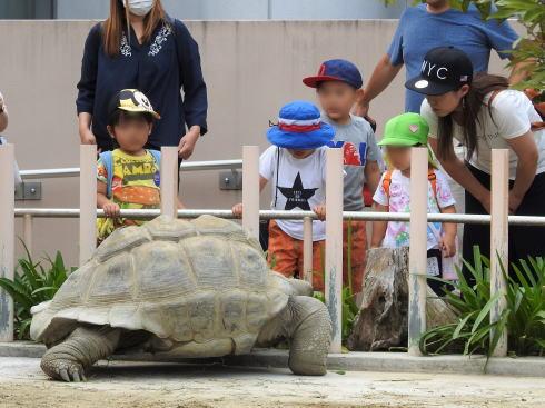 東山動物園 亀