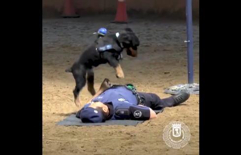 警察犬が心臓マッサージ!スペインのワンコがジャンピング心肺蘇生法