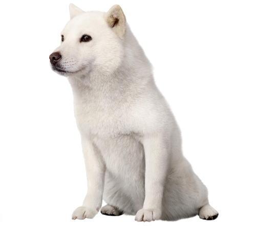 初代 お父さん犬・カイくんが老衰、ソフトバンクCMの看板犬