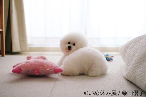 犬派に朗報!「いぬ休み展」東京・名古屋で開催へ