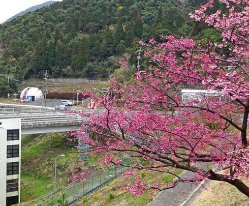 鹿児島に春、内之浦ロケットセンターの桜も満開