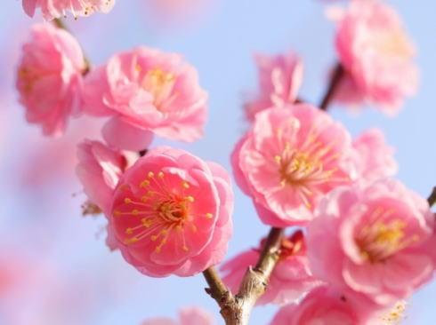 令和(れいわ)出典は万葉集、梅の花詠んだものに込められた想いとは