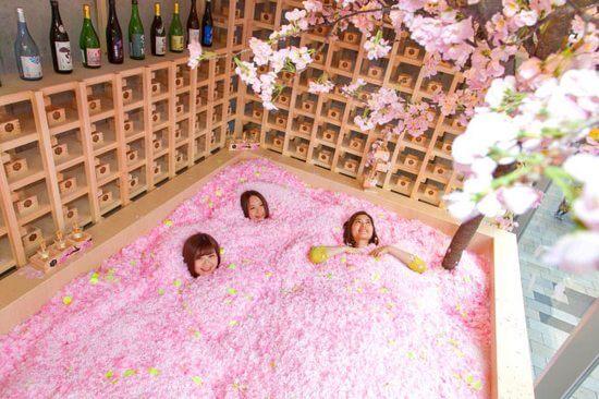 桜の花びらプールに埋もれる「サクラチルバー」でお花見体験!佐賀のお酒&イチゴ楽しむ