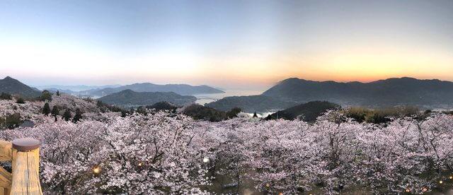 開山公園、展望台から見る桜のパノラマ風景