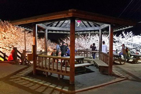 開山公園で桜のライトアップ