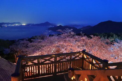 夜桜も!開山公園で桜のライトアップ