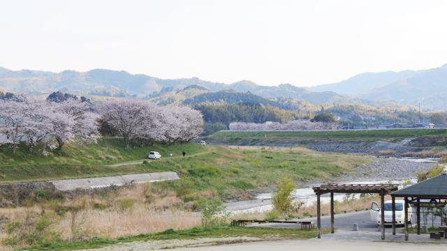 福岡・矢部川沿いの桜 俯瞰写真