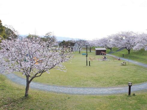 福岡・矢部川沿いの桜 宮野公園