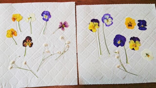 押し花の作り方 アイロン 完成