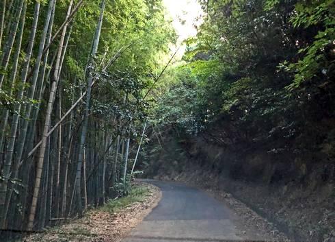 嵩山展望台まで車でアクセス可能だが、細くて険しい道多し!