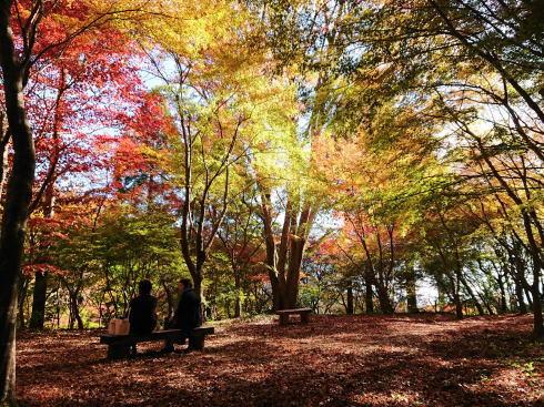 佐賀県 環境芸術の森 園内の紅葉の様子6
