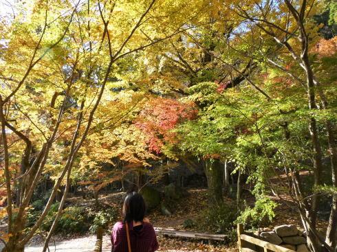 佐賀県 環境芸術の森 園内の紅葉の様子2