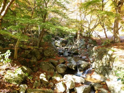 佐賀県 環境芸術の森 園内の紅葉の様子9