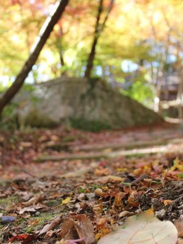 佐賀県 環境芸術の森 園内の紅葉の様子8
