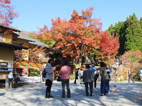 佐賀県 環境芸術の森 メインの建物「風遊山荘」