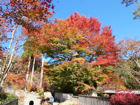 佐賀県 環境芸術の森 園内の紅葉の様子5