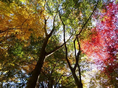 佐賀県 環境芸術の森 園内の紅葉の様子3