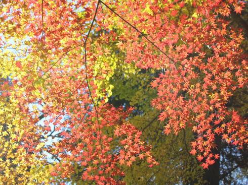 佐賀県 環境芸術の森 園内の紅葉の様子4