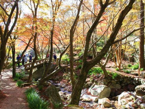 佐賀県 環境芸術の森 園内の紅葉の様子
