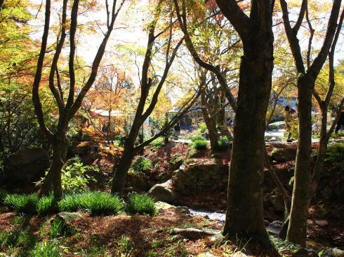 佐賀県 環境芸術の森 園内の紅葉の様子7
