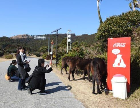 都井岬ビジターセンター前で、馬に遭遇