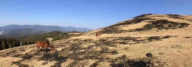 都井岬の御崎馬は高い場所にいることが多い