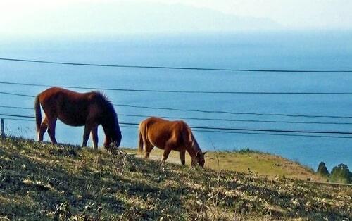 日本でここだけ!宮崎・都井岬は「馬の楽園」絶景の中で野生馬に出会える!