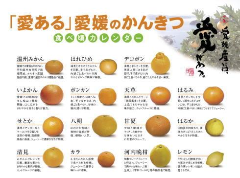 柑橘オールスターズ ポスター