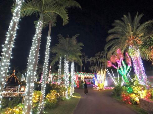 東南植物楽園 イルミネーション 写真9