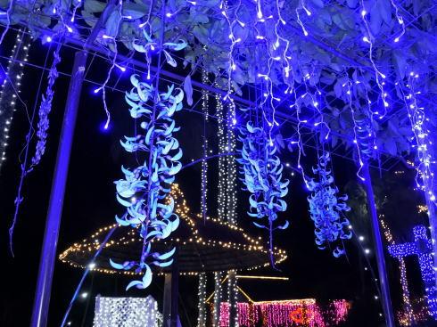 東南植物楽園 イルミネーション 写真11