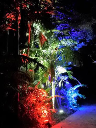 東南植物楽園 イルミネーション 写真10