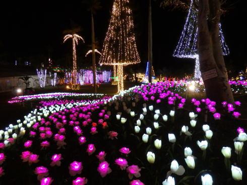 東南植物楽園 イルミネーション 写真3