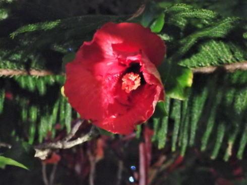 東南植物楽園 イルミネーション 写真13