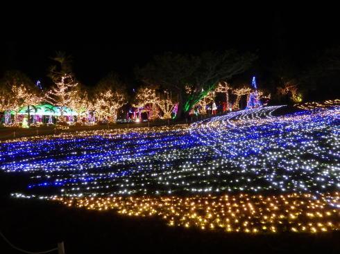 東南植物楽園 イルミネーション ひかりの絨毯