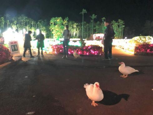 東南植物楽園 イルミネーション 写真6