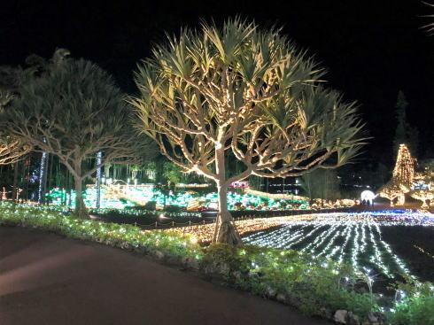 東南植物楽園 イルミネーション 写真8