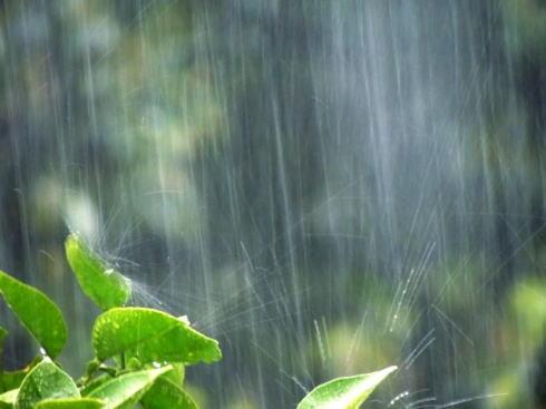 2020の梅雨は「短い」が「雨量多め」ウェザーニューズが予想