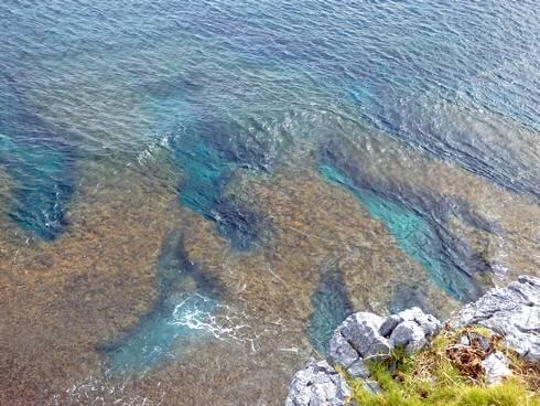 辺戸岬から見るサンゴ礁
