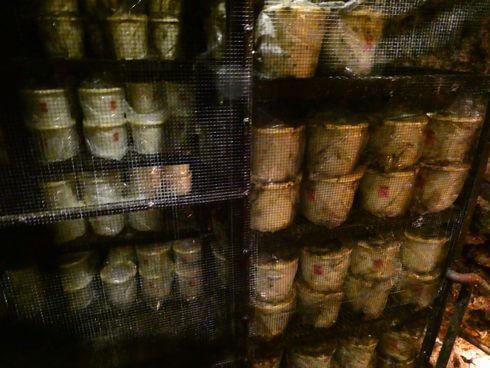 金武鍾乳洞の古酒蔵で、豆腐餻(とうふよう)も熟成