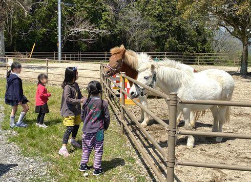蜂ヶ峯総合公園 Bee+(ビープラス)エリアで、ポニーの騎乗体験も