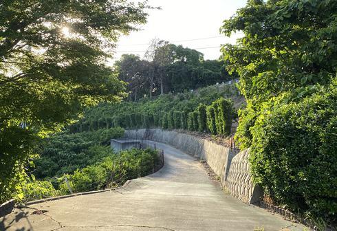 岡村島 ナガタニ展望台への道はとても狭くて急勾配
